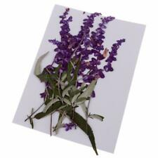 10pcs Pressed Real Dried Flowers Purple Flower for Art Craft Jewelry Making