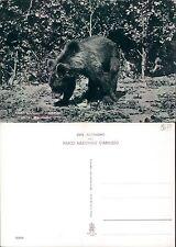 PARCO NAZIONALE D'ABRUZZO - L'ORSO MARSICANO       (rif.fg.8477)