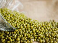 Mung Beans 500g Seeds Moong Vigna Radiata Sprout Green Gram Garden GMO Free Ship