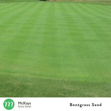 McKays Bentgrass Seed (Penncross) Grass Seed - 1kg - Free Postage - Lawn Seed
