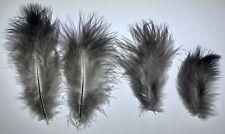 60 Wild Merriam Turkey Down Feathers 4-7 1/2