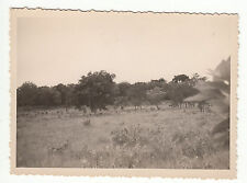 PHOTO MILITAIRE   AFRIQUE  TROUPEAU DE BICHES  A REGARDER A LA LOUPE
