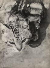 1929 Original LASZLO MOHOLY-NAGY Tabby Cat Feline Animal Vintage Photo Art 16X20