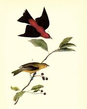JOHN JAMES AUDUBON 1937 BookPrint SCARLET TANAGER Art Birds of America Painting