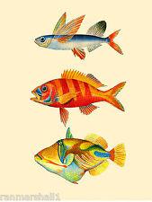 Hawaii Humuhumunkunukuapua'a Fish United States Travel Advertisement Poster 2