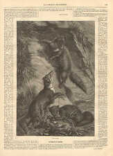 Minks, Fur, Trapping, Hunting, Vintage, 1872 French Antique Art Print,