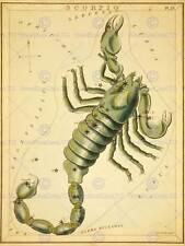 Disegno Stella Mappa Costellazione Scorpione Scorpio NEW art print poster cc3623