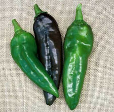 """Anaheim Pepper *Heirloom* (50 Seed's) """"FREE SHIPPING""""<Non-GMO>"""