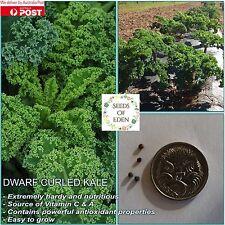 20 DWARF CURLED KALE SEEDS(Brassica oleracea acephala);Nutritious vegetable