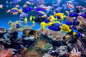 VLIES Fototapete-UNTERWASSERWELT-(646)-Koralle Fische Tiere Meer Ozean Fauna
