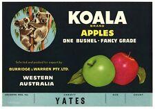 KOALA, Vintage Tasmania, Australia, *AN ORIGINAL CRATE LABEL*   Yates S31