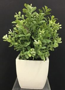 "Boxwood Greenery Plant in White Ceramic Vase~TT Green~9"" T~PVC/Artificial"