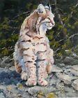 Bobcat original oil painting 8x10 inches wildlife art Gary White