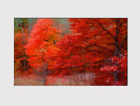 226  LARGE CANVAS 18''x 32'' WALL ART RED TREE AUTUMN PARK FOREST PRINT PICTURE
