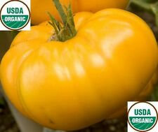 20 seeds ORGANIC Brandywine YELLOW Tomato Rare Heirloom Beefsteak Non-GMO Fresh