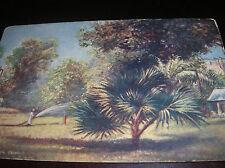 Antique Post Card Tuck's OILETTE Picturesque Egypt Cairo Gardens England x