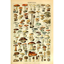 Vintage Poster Print Mushroom Champignon Identification Reference Chart Wall Art
