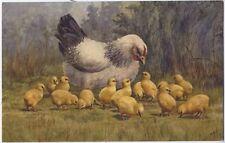 Chicken Bird and its chicks Vintage Artist Signed Postcard