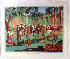 Vintage Schools Poster - Drying Copra in the South Sea Islands - 1920s /  1930s