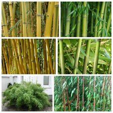 20 Moso-Bamboo Herbs Seeds 10 Kinds Beautiful Decorative Perennial Garden Plants