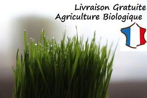 Graines HERBE A CHAT Bio - Quantité au choix - Chat Lapin rongeur animaux germer