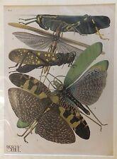 Seguy Série des insectes Planche 8 - 1929