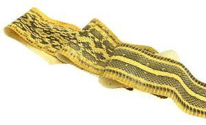 Elaphe Carinata Snake Skin Leather Snakeskin Unbleached Citrine ETA 1wk