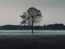PHOTO LONE TREE LANDSCAPE MISTY GREEN GIANT POSTER WALL ART PRINT LLF0048