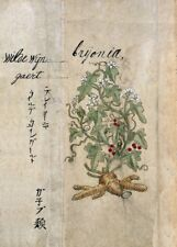 "MANDRAKE (Bryonia Alba) ""Un Japonais à base de plantes"" 17th Century plant Anatomy Poster"
