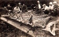 ANTIQUE REPRINTED 8 X10 PHOTOGRAPH SHOWING SUCCESSFUL CROCODILE HUNTING
