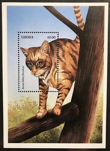 LIBERIA CATS STAMPS S/S 1999 MNH BROWN TABBY SHORTHAIR DOMESTIC ANIMALS PET