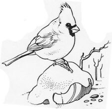 Unmounted Rubber Stamp, Bird Stamps, Nature, Birds, Baby Cardinal, Cardinals