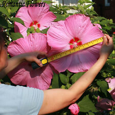 AA 10PCGiant Hibiscus Flower Seeds Hardy ,Mix Color, DIY Home
