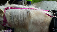 DAISY REIN web  Horse Pony - STOPS Ponies Eating Grass. ALL COLOURS