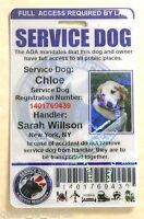HOLOGRAPHIC PVC SERVICE DOG ID BADGE SERVICE ANIMAL ID CARD ADA TAG FOR VEST #0H
