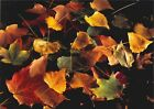 10 Original Photographic Art Note Cards With Envelopes Fall Painted Leaves C410