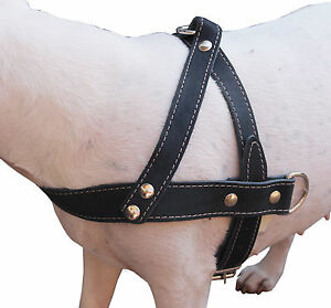 """Genuine Leather Dog Pulling Harness 1.5"""" wide  25""""-31"""" chest  Amstaff, Boxer"""