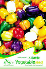 Original package 20 Pepper Seeds Colourful Sweet Pepper Capsicum Seed C024