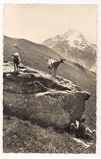 paysages alpestres  chèvres en montagne