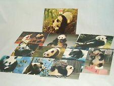 Panda Postcards SET of 10 from SPLENDID CHINA THEME PARK Florida - NEW