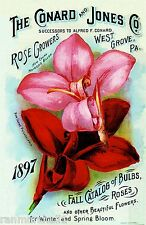 1897 New Canna Bulbs Vintage Flowers Seed Packet Catalogue Advertisement Poster