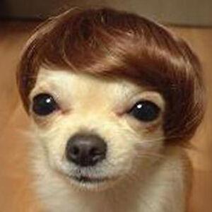 Pet Headwear Short Dog Wigs Wire Hair Accessories Halloween Festival Gift