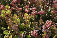 Succulent cuttings different varieties healthy and freshly cut Full box loaded
