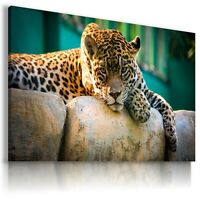 PANTHERA Domestic And Wild Animals Canvas Wall Art Picture Large  AN87 X MATAGA