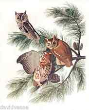 Owls in a Pine Tree by J. J. Audubon 9 x 12 inch mono deluxe Needlepoint Canvas
