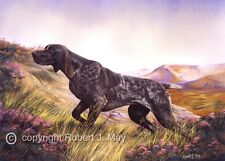 German Shorthaired Pointer Print by Robert J. May