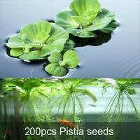 NE_ 200Pcs Aquarium Aquatics Plant Pistia Stratiotes Seeds Pool Fish Tank Decor