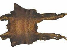 Frosch Leder Froschhaut Froschleder rot vom Ochsenfrosch