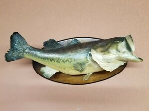 Taxidermy Large Mouth Bass 26'' Real Skin  Fish Mount GREAT MAN CAVE DECOR