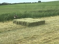 QUALITY SMALL BALES OF HAY